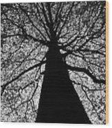 Static Tree Wood Print