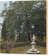 Statue And Tree Wood Print