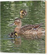 Staying Close To Mom Wood Print