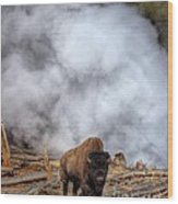 Steamed Bison Wood Print