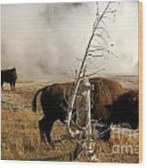 Steaming Bison Wood Print