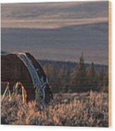 Steens Sundown Wood Print