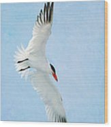 Steep Tern Wood Print