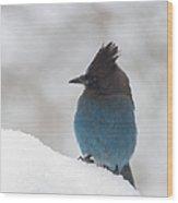 Steller Jay In The Snow Wood Print