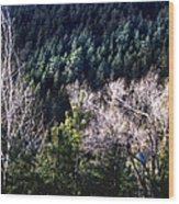 Steller's Jay Near Greyrock Mountain Colorado Wood Print by Ric Soulen
