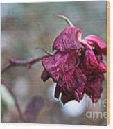 Stem Dried Petals Wood Print