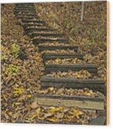 Step Trail In Woods 11 Wood Print