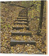 Step Trail In Woods 14 Wood Print