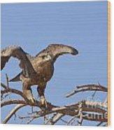 Steppe Eagle Aquila Nipalensis 1 Wood Print