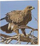 Steppe Eagle Aquila Nipalensis 2 Wood Print