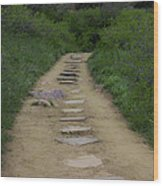 Steps Through Nature Wood Print