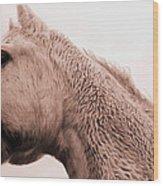 Sterling In Sepia Wood Print