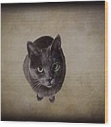 Sterling The Cat Wood Print