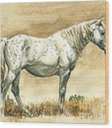 Sterling Wild Stallion Of Sand Wash Basin Wood Print by Linda L Martin