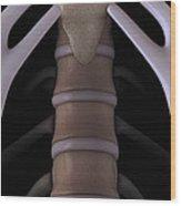 Sternum And Lumbar Vertebrae Wood Print
