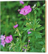 Sticky Geranium Wood Print