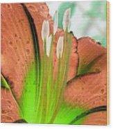 Stigma - Photopower 1002 Wood Print