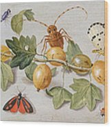 Still Life Of Branch Of Gooseberries Wood Print by Jan Van Kessel