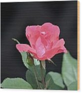 Still Life Portrait Of A Rose Wood Print