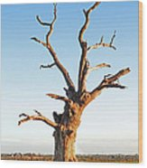 Still Standing Proud Wood Print