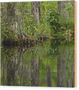 Stillness Swamp Wood Print