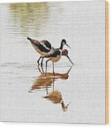 Stilt And Avocet Eat Together Wood Print