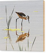 Stilt Chick Looking For Food Wood Print