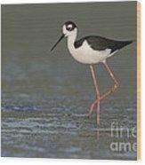 Stilt In Duckweed Wood Print