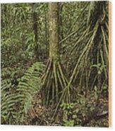 Stilt Roots In The Rainforest Ecuador Wood Print