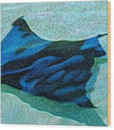Sting Ray Wood Print