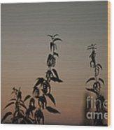 Stinging Sunset Wood Print