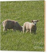 Stirling Sheep Wood Print