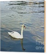 Stockholm City Harbor Swan Wood Print