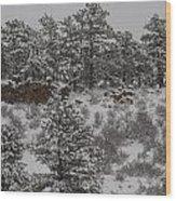 Stockpiled Warmth Wood Print