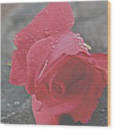 Stone Cold Rose Wood Print