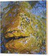 Stone Fish Wood Print