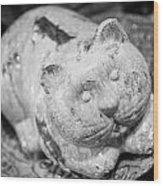 Stone Kitty Wood Print
