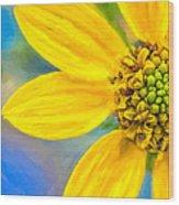 Stone Mountain Yellow Daisy Details - North Georgia Flowers Wood Print