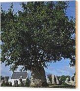 Stone tree Wood Print