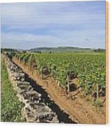Stone Wall. Vineyard. Cote De Beaune. Burgundy. France. Europe Wood Print by Bernard Jaubert