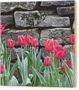 Stoned Tulips Wood Print