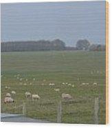 Stonehenge Sheep Wood Print