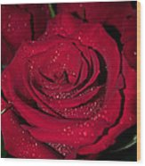 Stop To Smell The Roses Wood Print
