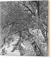 Storm Over The Cottonwood Trees - Black And White Wood Print