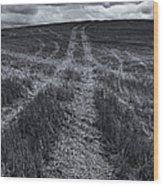 Storm Tracks Wood Print