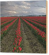 Stormy Red Tulips Wood Print