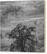 Stormy Tree Wood Print