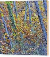 Story Rainforest Wood Print