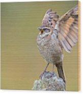 Stout-billed Cinclodes Wood Print