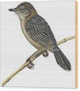 Stout Cisticola Wood Print